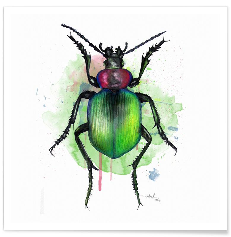 Kevers, Calosoma Sycophanta poster