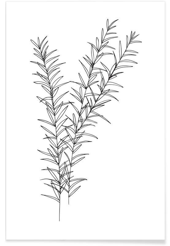 Schwarz & Weiß, Rosmarin -Poster