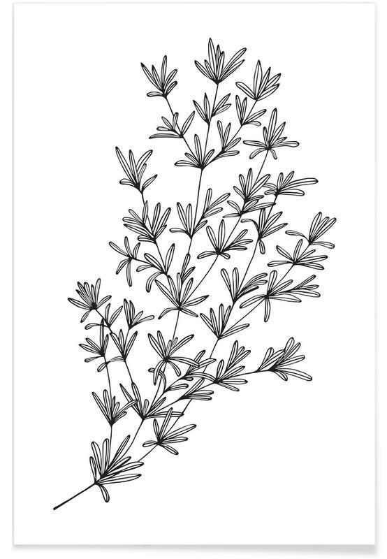 Schwarz & Weiß, Blätter & Pflanzen, Bohnenkraut -Poster