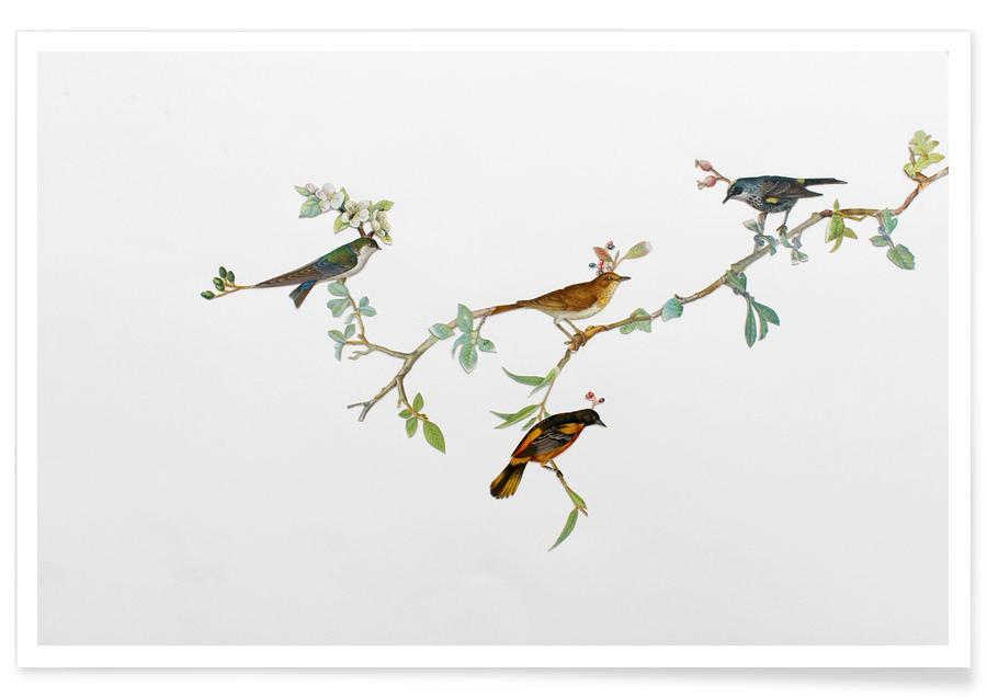 , Bird Branch poster
