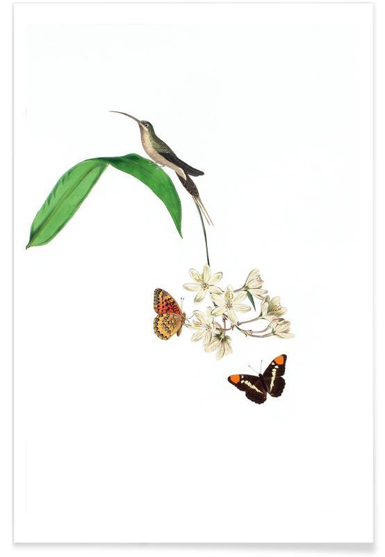Vintage, Bird of Paradise #17 affiche