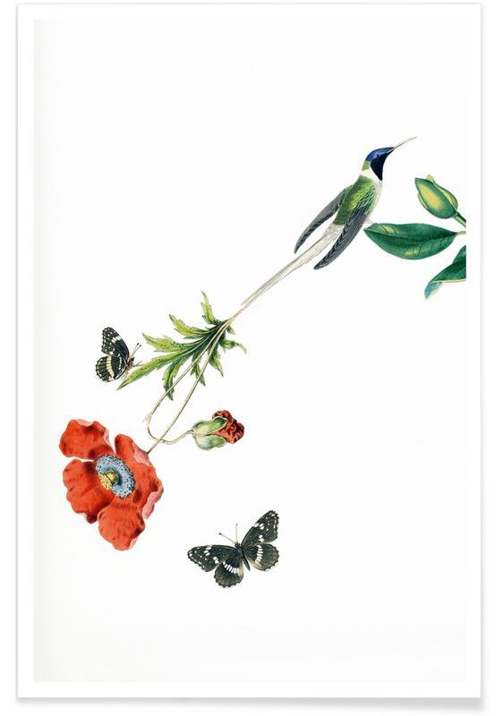 Vintage, Bird of Paradise #20 poster