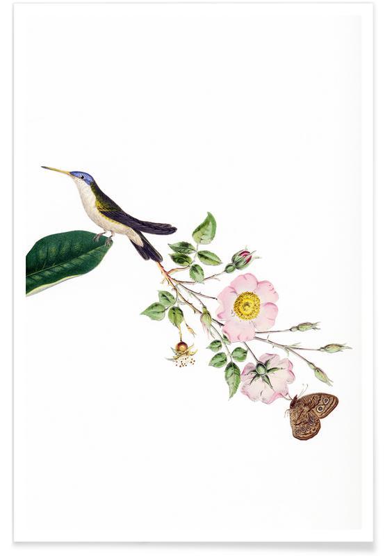 Vintage, Bird of Paradise #22 poster