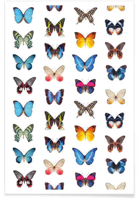 Papillons, Colourful Butterflies affiche