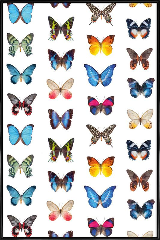 Colourful Butterflies Framed Poster