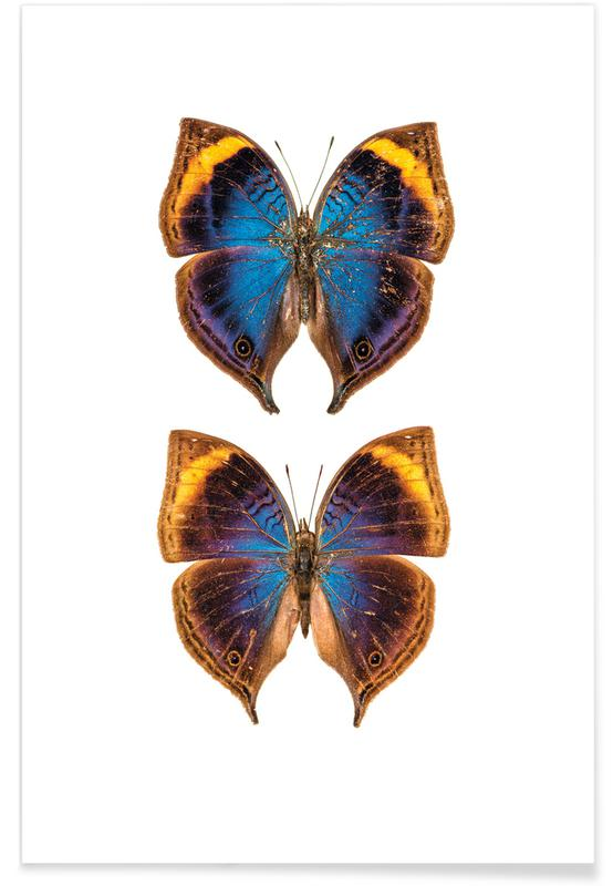 Vlinders, Buterfly Duo poster