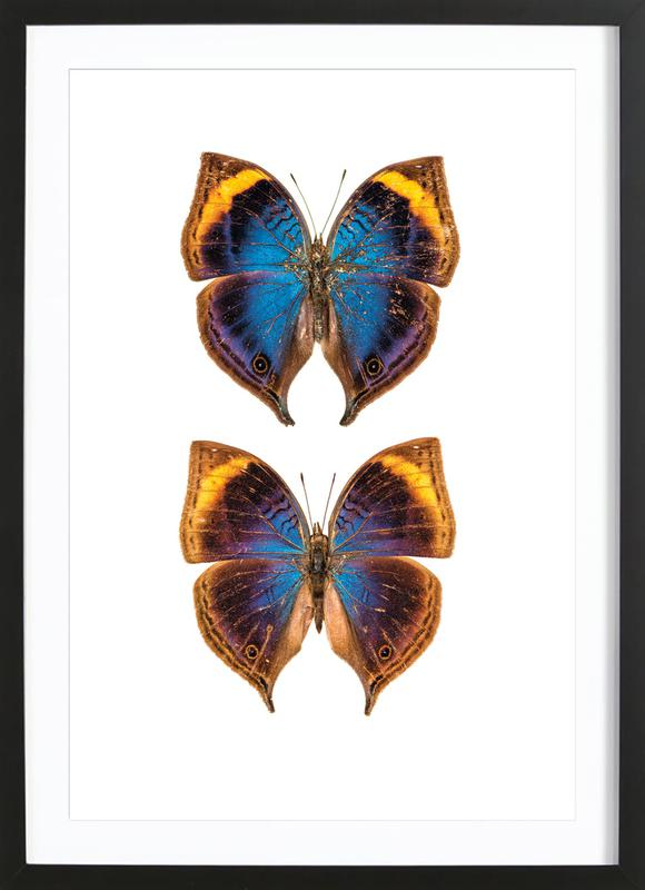 Buterfly Duo Framed Print