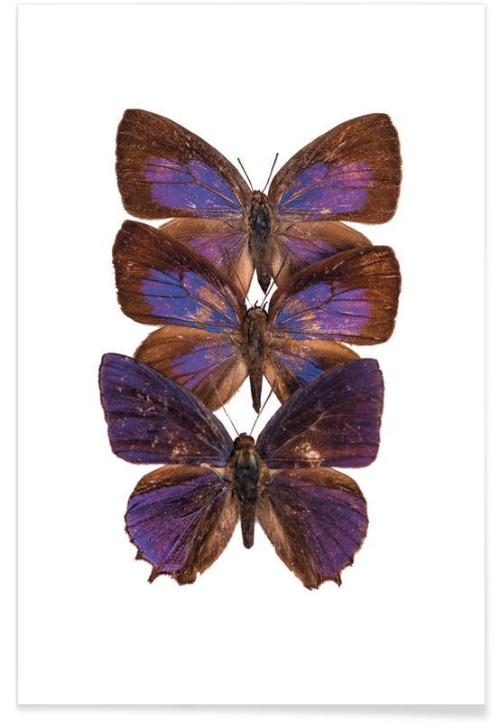 Butterflies, Butterflies Poster