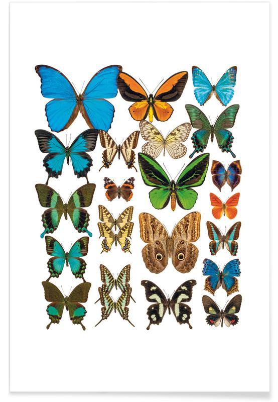 Schmetterlinge, Rarity Cabinet I -Poster