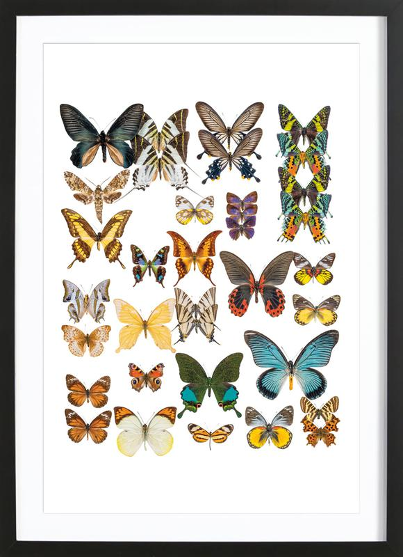 Rarity Cabinet II -Bild mit Holzrahmen