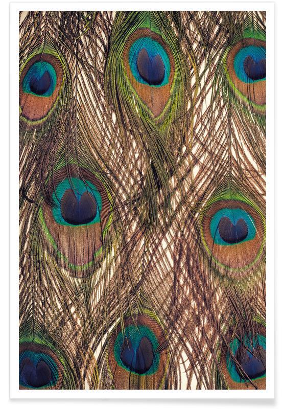 Peacocks, Peacock Poster