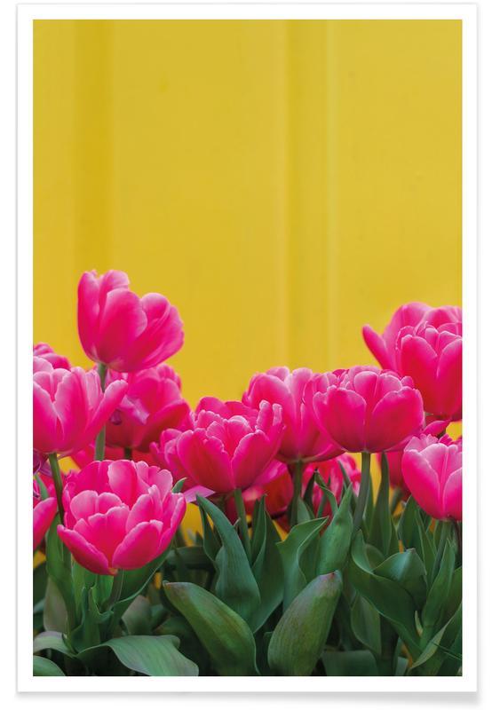 Tulpen, Pink Tulips Yellow -Poster