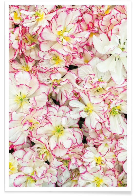 Tulpen, Romantic Tulips -Poster