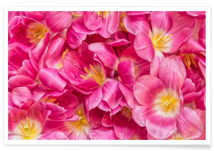 , Pink Tulips Poster