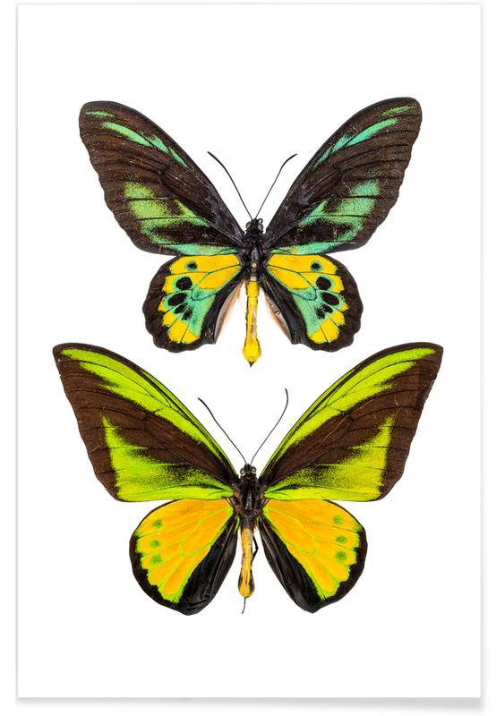 Papillons, Butterflies 2 affiche