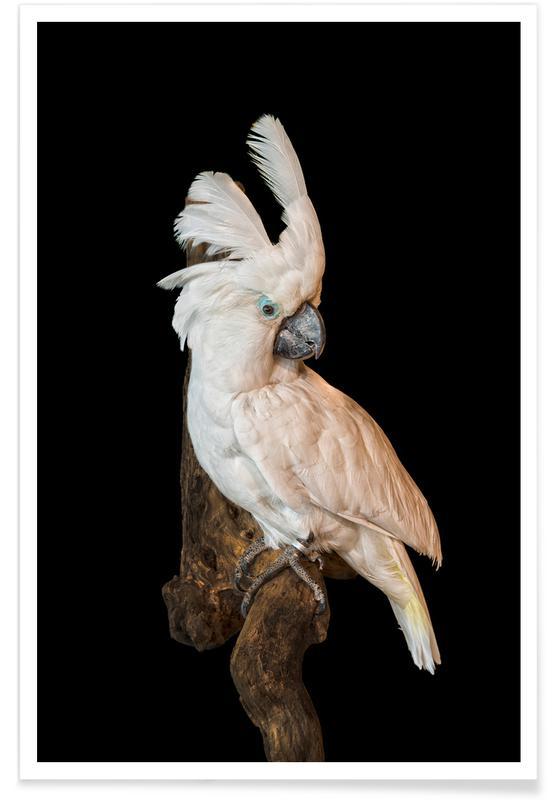 , Birds 1 -Poster