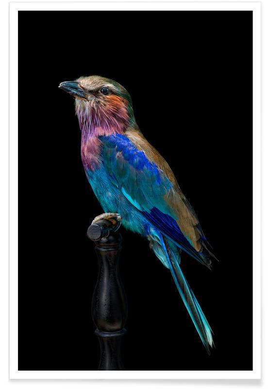 , Birds 2 poster