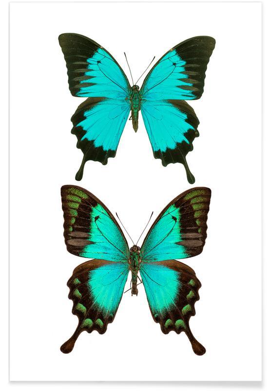 Vlinders, Butterflies 1 poster