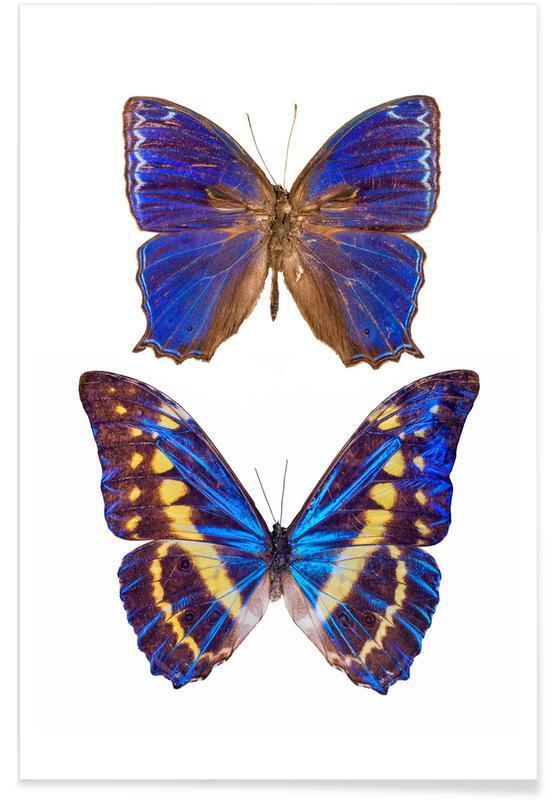 Papillons, Butterflies 4 affiche