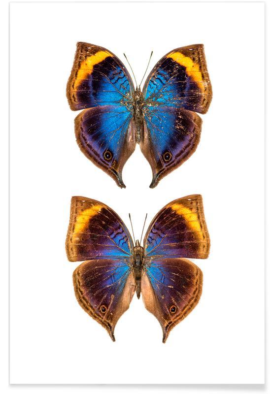 Papillons, Butterflies 3 affiche