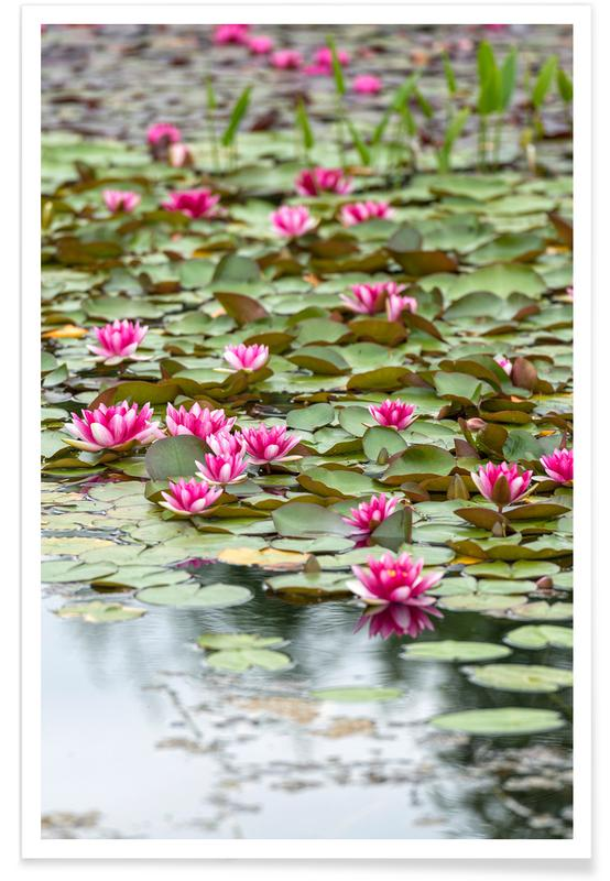 , Waterlillies 1 poster
