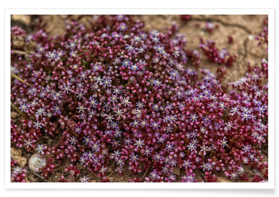 , Magical Malta Tiny Purple Flowers Poster