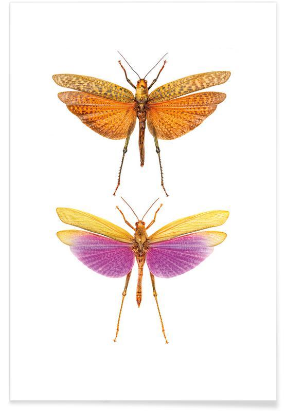 Græshopper, Insect 1 Plakat