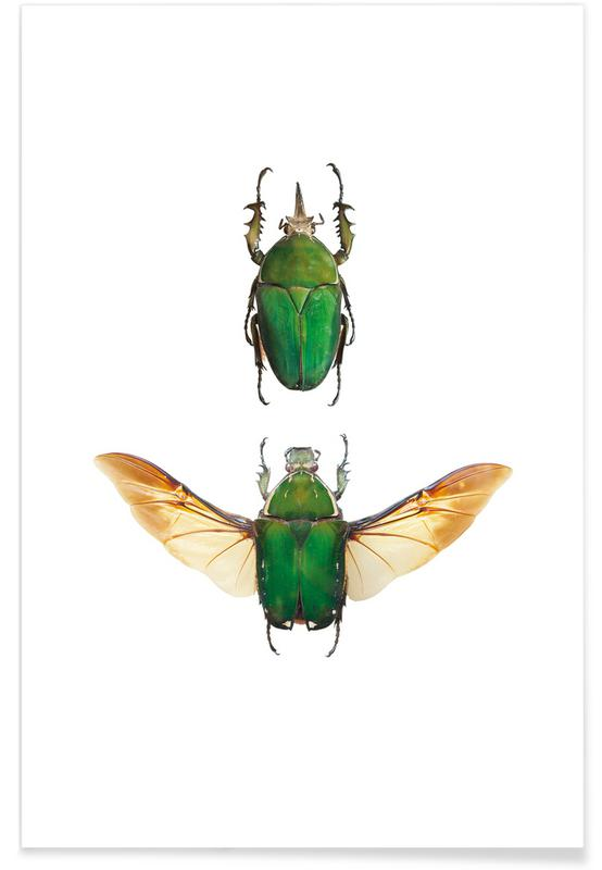 Beetles, Insect 2 Poster