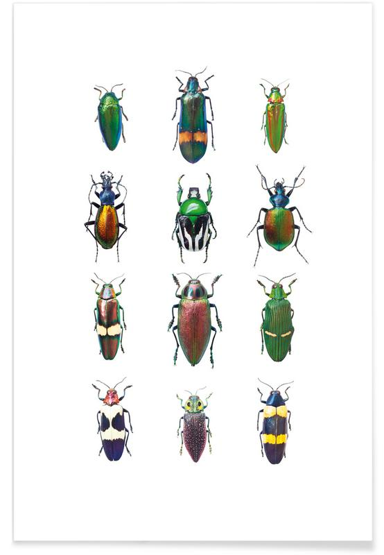 Biller, Insect 3 Plakat