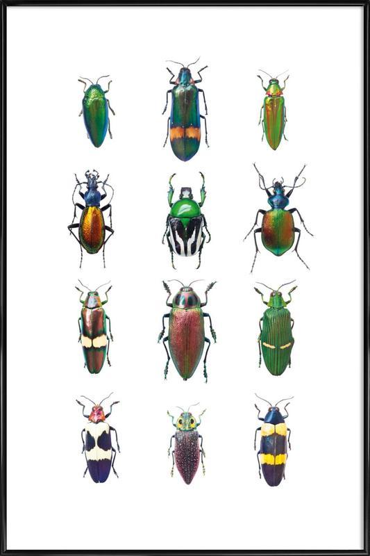 Insect 3 -Bild mit Kunststoffrahmen