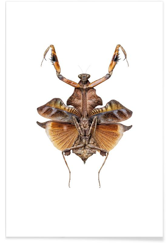 Insect 5 -Poster