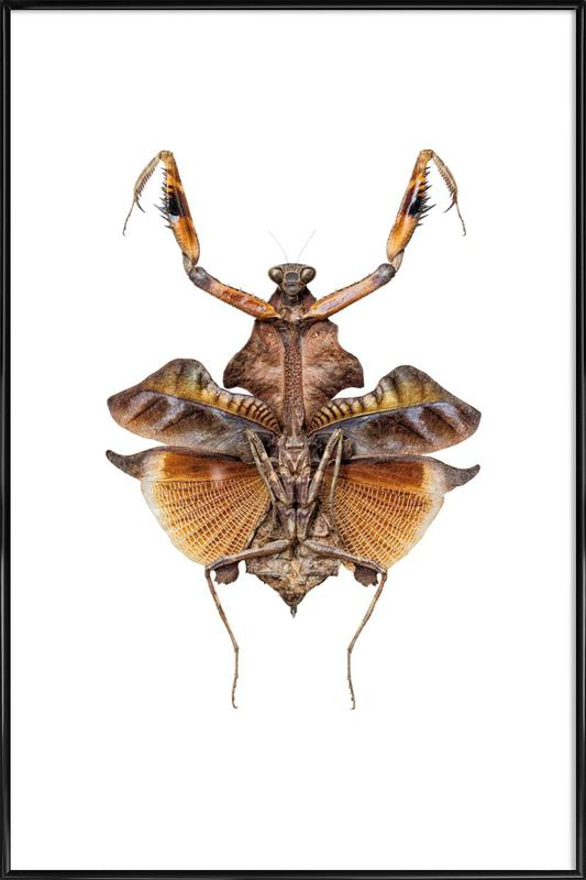 Insect 5 -Bild mit Kunststoffrahmen
