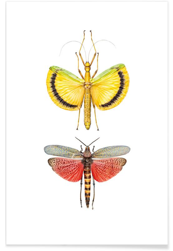 Dragonflies, Insect 6 Poster