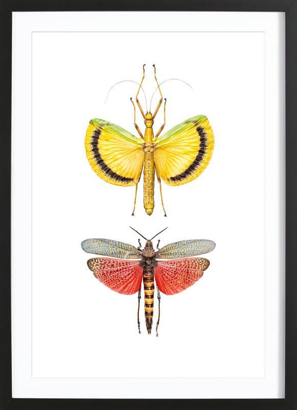 Insect 6 ingelijste print