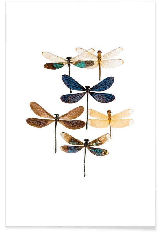 Insect 7 Plakat