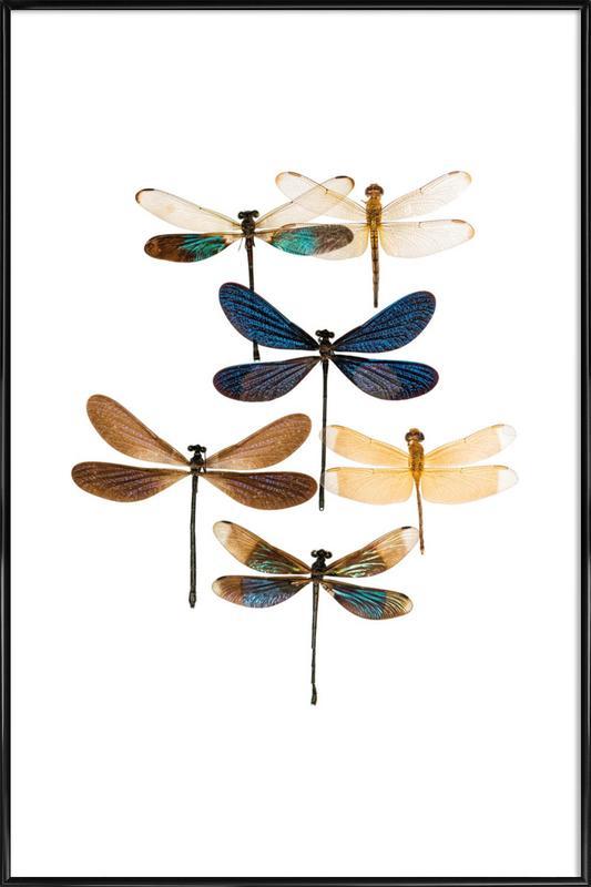 Insect 7 ingelijste poster