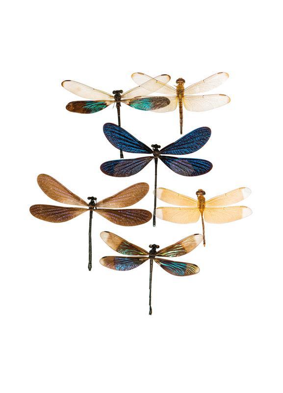 Insect 7 Lærredstryk