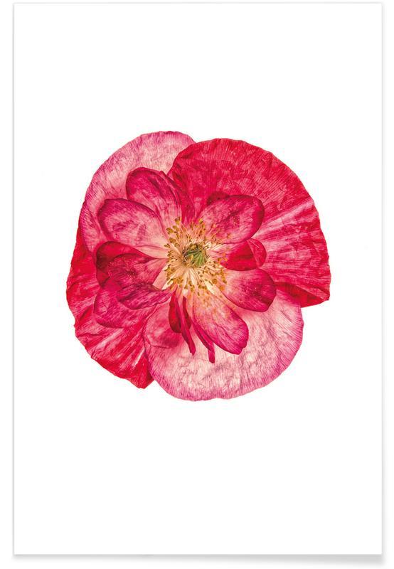 Klaprozen, Poppy 1 poster