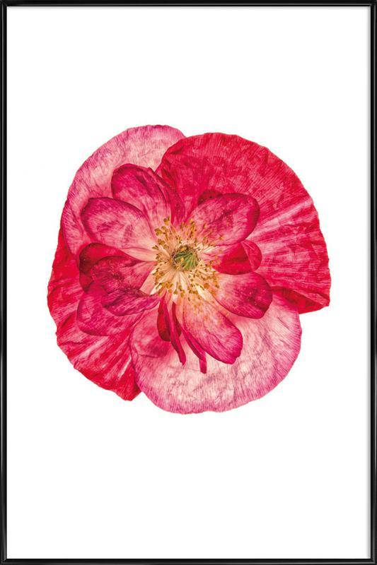 Poppy 1 -Bild mit Kunststoffrahmen