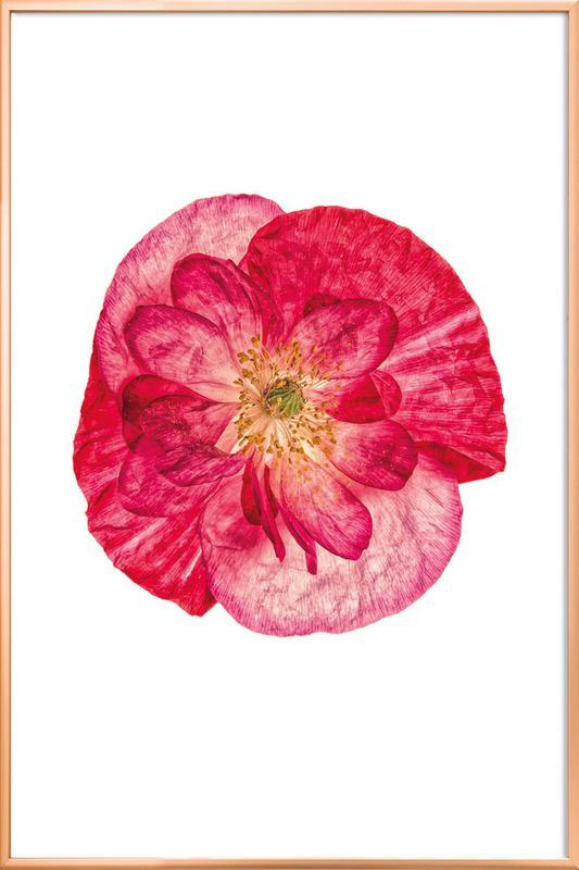 Poppy 1 -Poster im Alurahmen