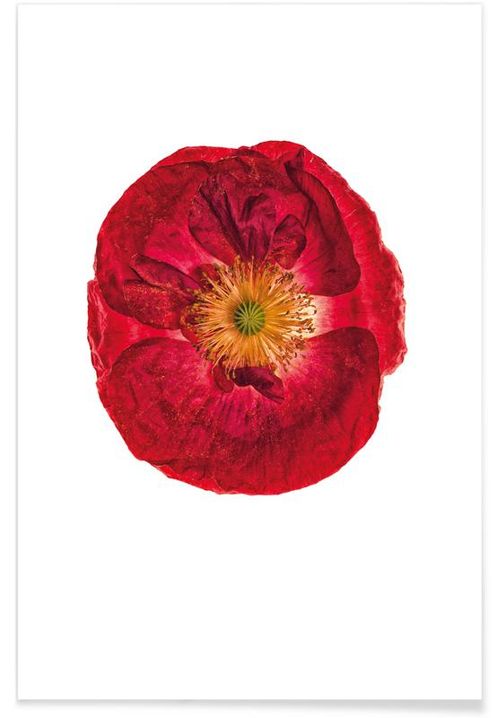 Coquelicots, Poppy 2 affiche