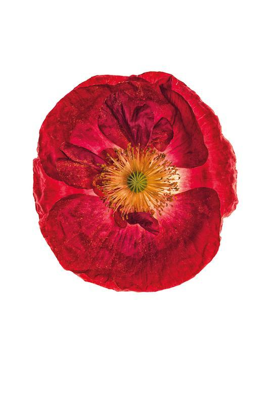Poppy 2 -Acrylglasbild