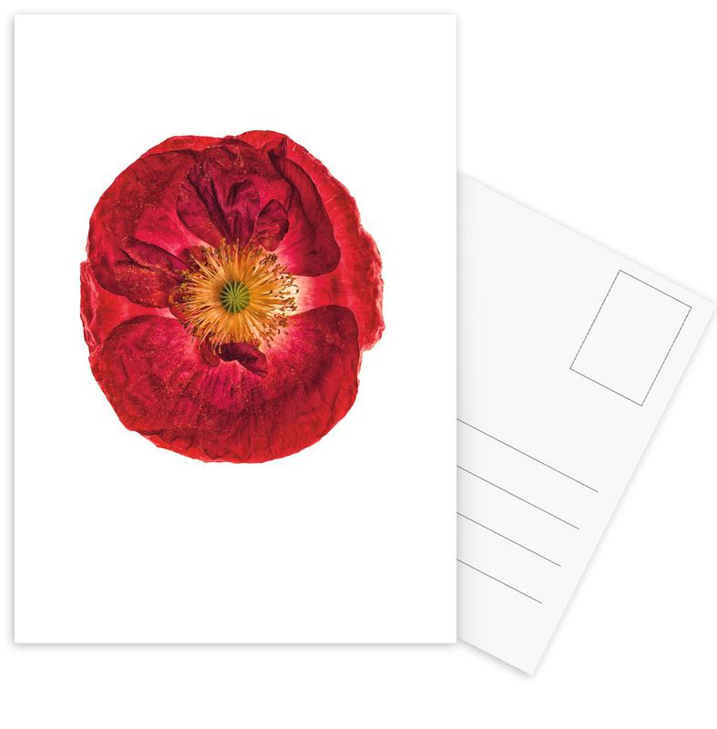 Poppy 2 Postcard Set