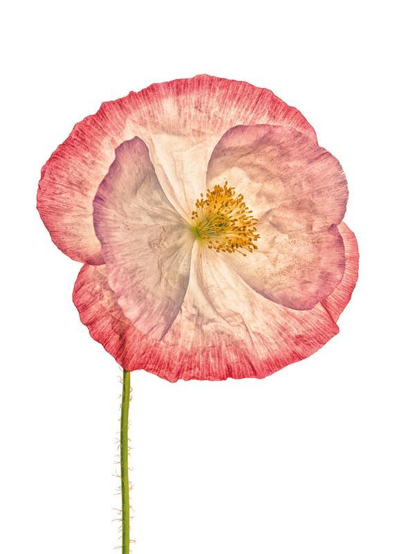 Poppy 3 -Leinwandbild