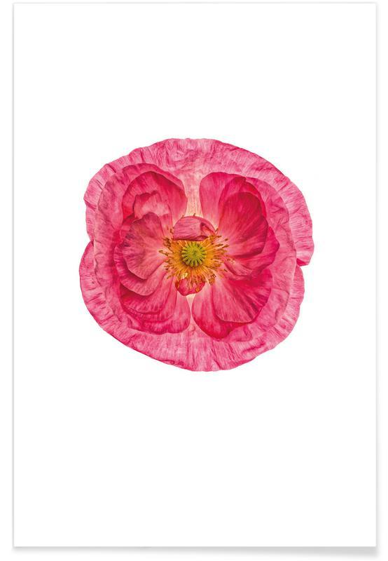 Mohnblumen, Poppy 4 -Poster