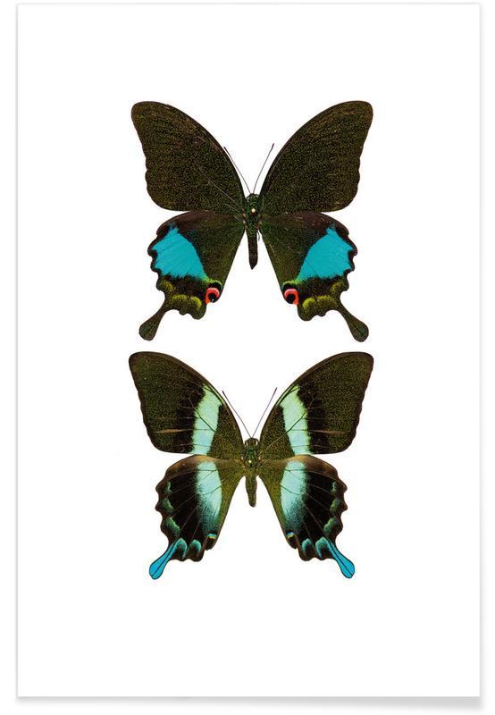 Butterflies, Butterfly 2 Poster