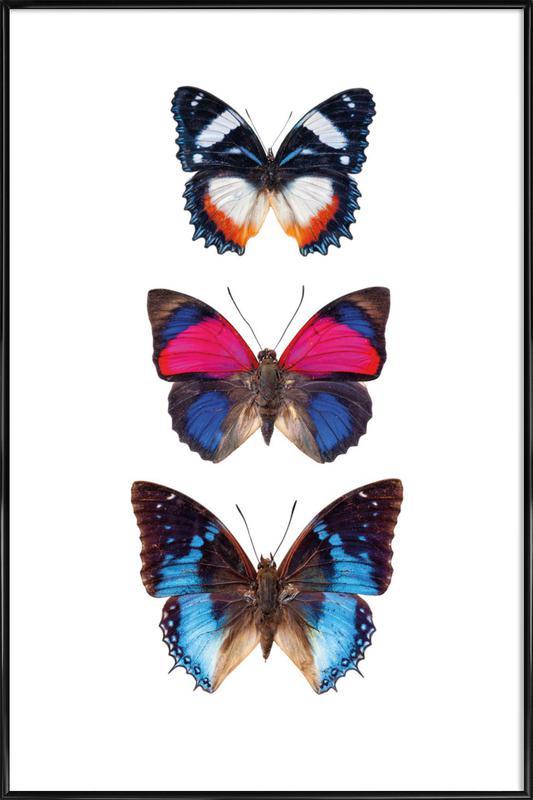 Butterfly 3 affiche encadrée