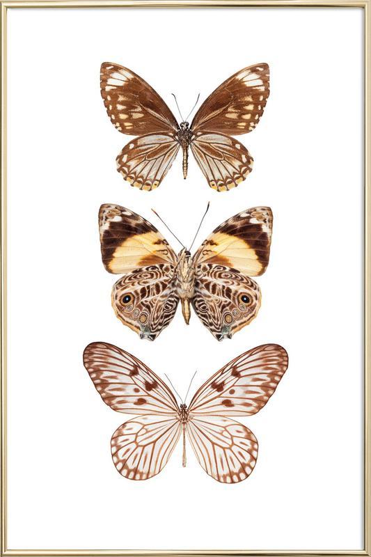 Butterfly 6 -Poster im Alurahmen