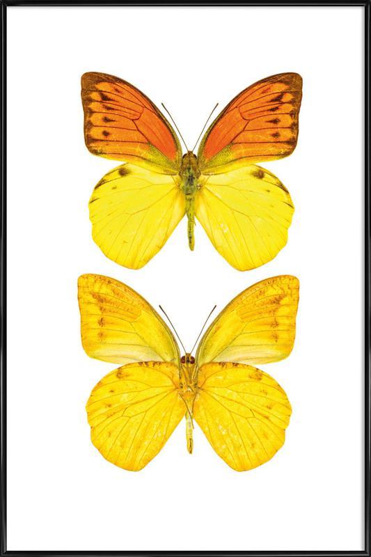 Butterfly 7 affiche encadrée