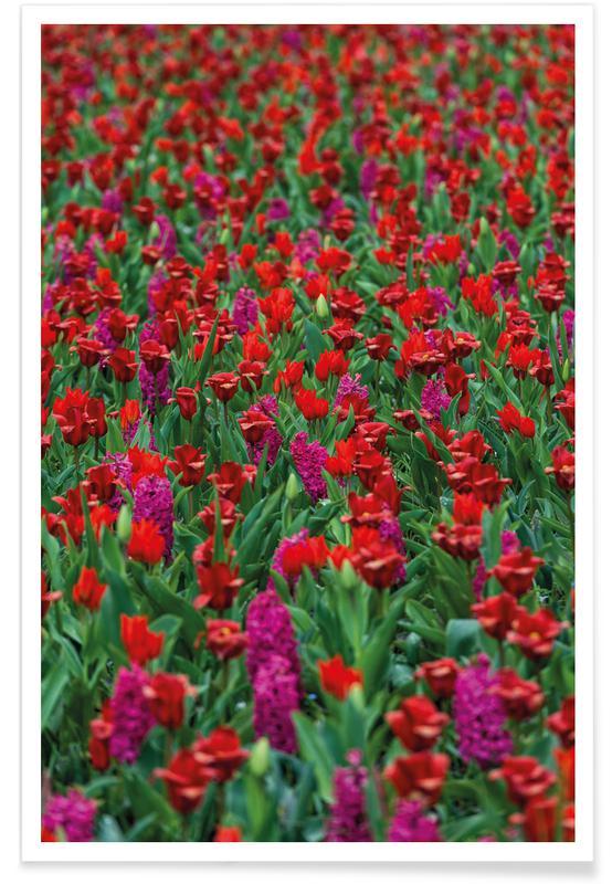Tulpen, Tulip Field Red poster